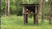 Орангутан се направи на пророк за Купата на Германия