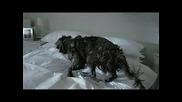 Отмъщението на едно куче