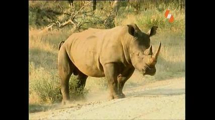 Енциклопедия на животните - Носорог
