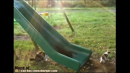 Котешка надпревара на пързалка :)