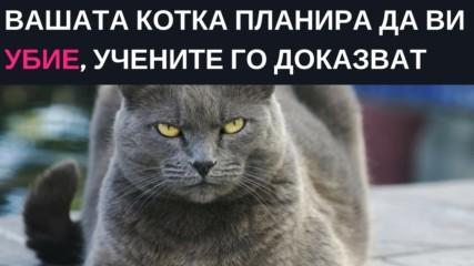 Вашата котка планира да ви убие и учените имат доказателства за злодейството