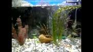Nashiqt Akvarium