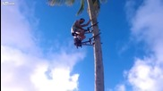 Приспособление за катерене по палми