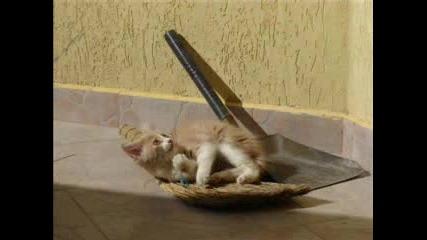 Моята Котка, Която Обича Да Си Похапва