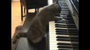 Котка Свири На Пиано Много Добре