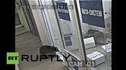 Избягали еноти нанасят щети в руска фирма