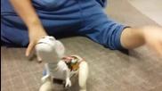 Готина бебе динозавър играчка!