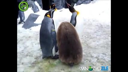Откога Пингвините Са Расисти :d?