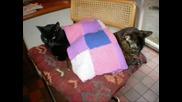 Funny Cats - Смешни Кoтки