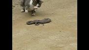 Kотка vs Змия