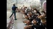 Да станеш храна на кучетата