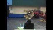 Цигански танц - характерни танци - Superforma