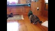 Тая котка остана с един живот по малко