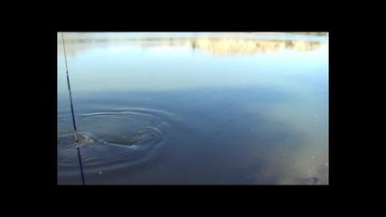 Риболов на сом ( 2,30м ) на река Ебро ( Испания )