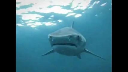 Акула се усмихва !!