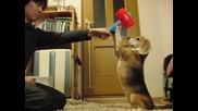 Сладкото кученце хваща разни неща..
