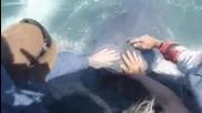 Дружелюбни акули нещо не виждано