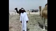 Камила осира арабин