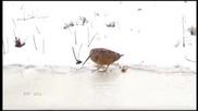 Птица в ритъм !