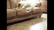 най умното куче според мен