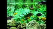 Красиви рибки