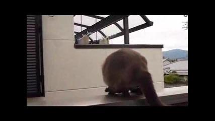 Коте се проваля при скок