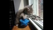 Котешки марш във фотоалбум
