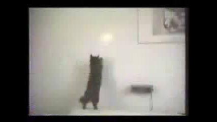 Луди котки 100% смях