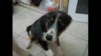 Малкият Мук! Зов За Помощ - Кутренце с отрязани крачета (14+)-animal Rescue Sofia