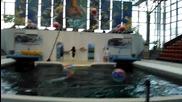 Представление на делфини в Делфинариум Варна