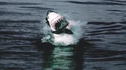 Великата бяла акула