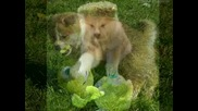 Puppies of Japanese Akita Inu