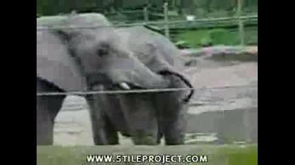 На Слончето Му Се Яде