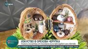 """""""Социална мрежа"""": Студентката, която побира света в орехови черупки"""