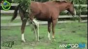 Разгонена кобила и дръвче