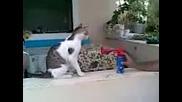 Как се плаши котка - Голям смях