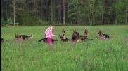 Момиченце на 5 години си играе с 14 немски овчарки.