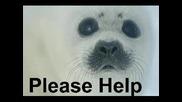 Помогнете На Тюленчетата От Избиване