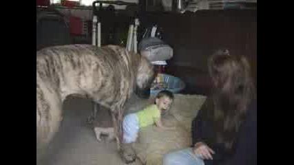 Приятели - Бебе И Куче