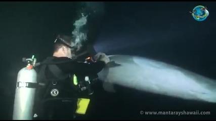 Пострадал делфин от забита рибарска кука в перката си търси помощ от група леководолази