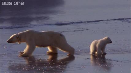 "[hd] Полярни Мечки ""ice Skating"""