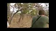 Dangerous Animals - Mark Sullivan