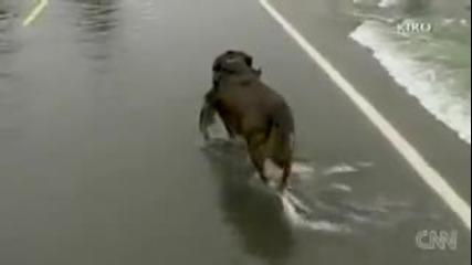 - Куче хваща риби,докато пресичат пътя!!!