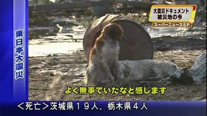 Японско Куче Отказало Да Напусне Пострадало Другарче