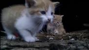 Mного сладки котенца