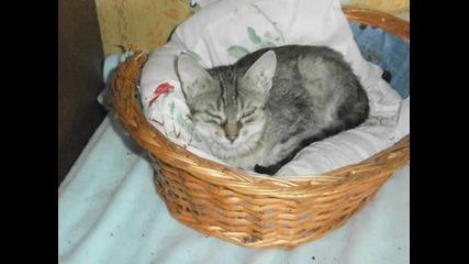 """Фондация """" Animal Hope Varna""""-от любов към животните..."""