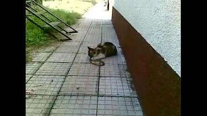 Коте Яде Смок