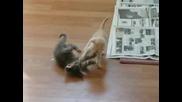Котенца Си Играят