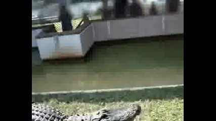 Не си пъхайте ръката в устата на крокодил !