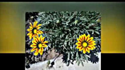 Цветята на село ,радост за душата ми.avi